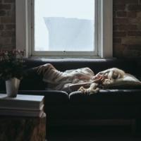 Ecco cosa scatena il sonno incontrollabile nei pazienti narcolettici