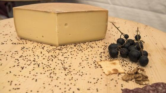 A Lucerna si sfidano i grandi formaggi della Svizzera con gli Swiss Cheese Awards