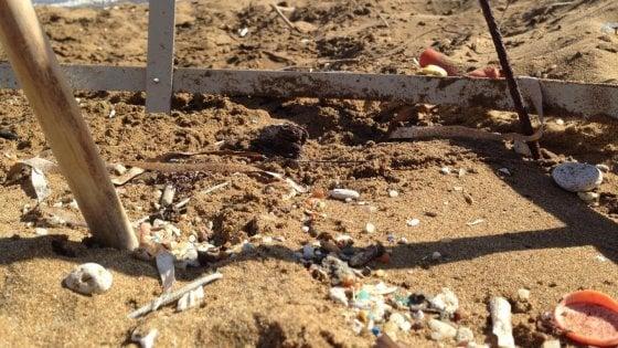 Microplastica anche sotto la sabbia, dove le tartarughe fanno il nido