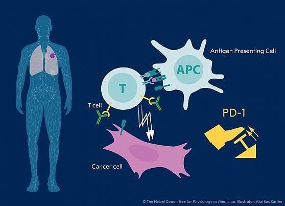 Il Nobel per la medicina a James Allison e Tasuku Honjo per la terapia anticancro