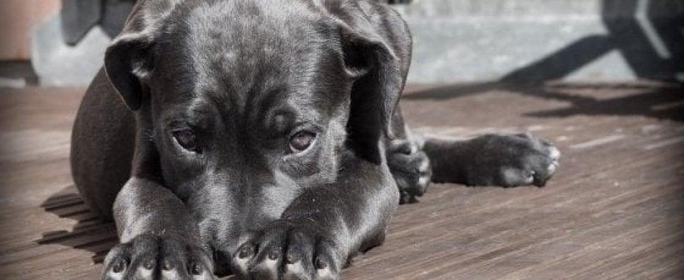 No, i cani non hanno un'intelligenza eccezionale rispetto agli altri animali