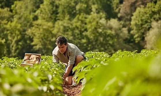 """La """"patata di campo"""" amica dell'ambiente"""