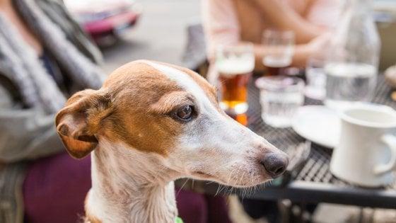 Cani e gatti al ristorante: la carica dei 101 (locali) che amano gli animali