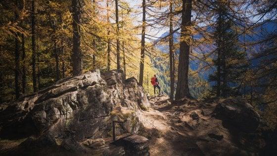 Lo spettacolo del foliage nei boschi del Trentino