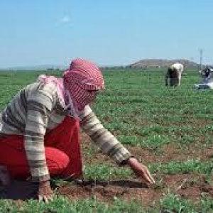 Siria, piogge irregolari e il persistere del conflitto lasciano il segno sull'agricoltura del Paese
