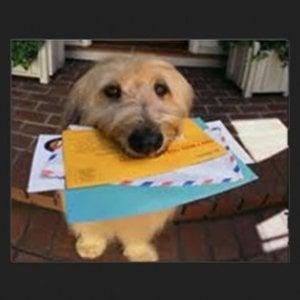 Sì ai cani negli uffici postali