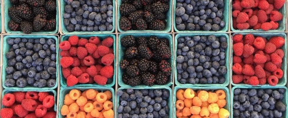 Colore, profumo, dolcezza: la lingua segreta tra piante e animali