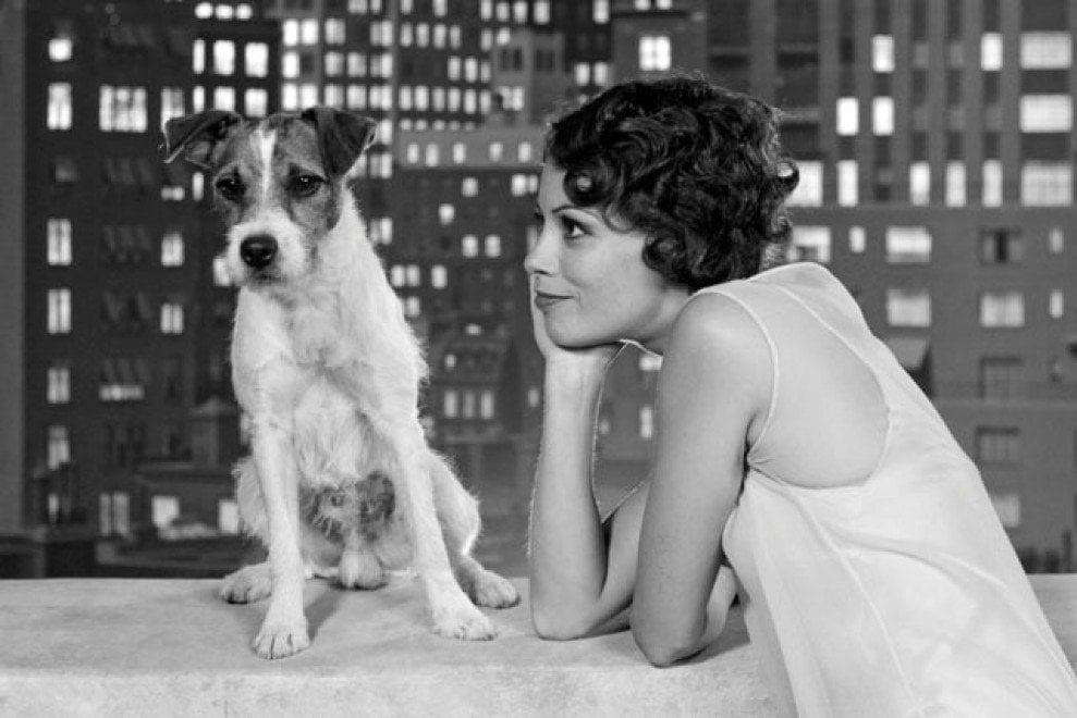 Da Lassie a Lilli e il vagabondo, tutti gli interpreti a quattro zampe