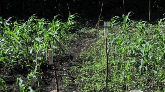 Ecologia e solidarietà, così gli studenti di Milano insegnano agli haitiani l'agricoltura sostenibile