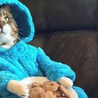 Il pigiama party del gatto, buffa gaffe dell'ambasciata Usa in Australia