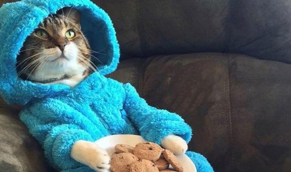 bene come ottenere nuovo prodotto Il pigiama party del gatto, buffa gaffe dell'ambasciata Usa ...