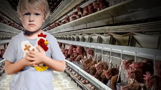 Basta animali allevati in gabbia: raccolta firme in tutta Europa, oltre 100mila in un mese