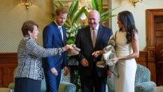 Royal baby, Meghan dopo l'annuncio:dagli abiti comodi al tubino bianco