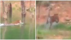 I pescatori e la tigre: il felino attraversa  il fiume e scappa nella foresta