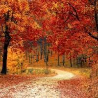 """Andar per funghi, passeggiate e giardinaggio: i medici ora prescrivono """"dosi"""" di natura"""