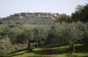 Cronaca annunciata di una passeggiata speciale: alla scoperta degli oliveti italiani