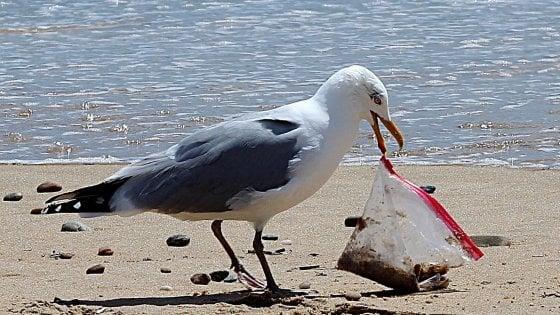 Plastica usa e getta vietata dal 2021. Cioè? Bicchieri, piatti, cannucce, cotton-fioc…