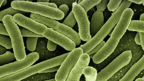 Così i microrganismi migrano per il clima che cambia