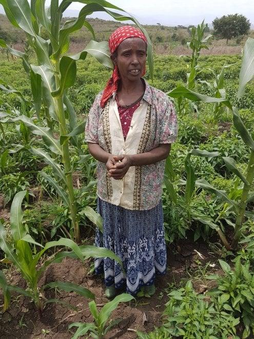 Progetto Employ, la formazione agricola e lo sviluppo sostenibile nei villaggi dell'Etiopia rurale