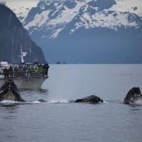 Il traffico spegne il canto delle balene.