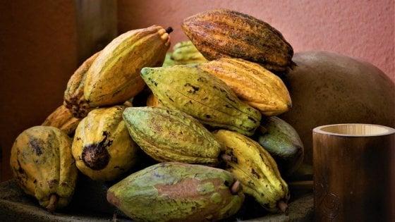 Il cioccolato più antico del mondo è di 5300 anni fa