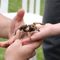 Paura dei ragni? Come superare le fobie con l'aiuto del ritmo cardiaco