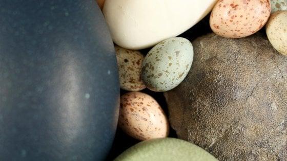 Le uova? Furono colorate dai dinosauri
