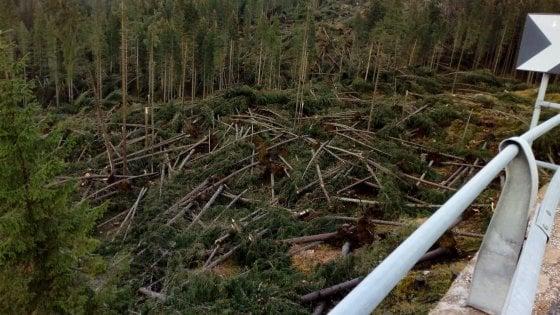 """Strage di alberi per il maltempo. Cristoforetti commossa: """"Pensavo che fossero eterni..."""""""