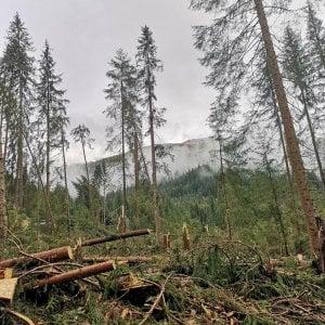 """Maltempo, il forestale Zovi: """"Stop alle importazioni di legno, ora usiamo il nostro prima che marcisca"""""""