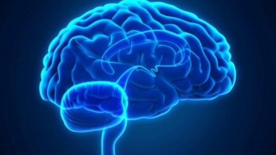 il nostro cervello