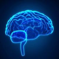 C'è un Gps nel nostro cervello a