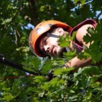 Emergenza alberi: ora rimedi hi-tech per i nostri  errori