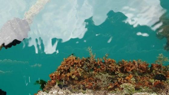 Dalle Galapagos alla Liguria: nuove specie aliene nei nostri mari