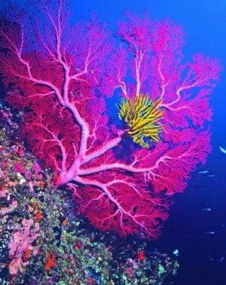 Scosse elettriche (e altro) per salvare la vita dei coralli