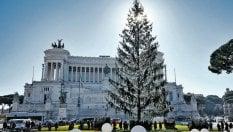 Spelacchio addio, arriva l'albero di Natale firmato Netflix da 376mila euro. Ma è già polemica