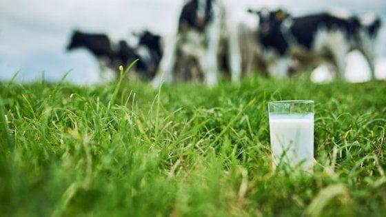Latteria sociale Valtellina, un'app per controllare il latte