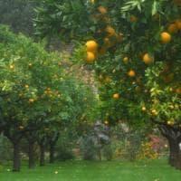 """Il """"Paradiso Terrestre"""" a Roma. Così i monaci di San Paolo Fuori le Mura coltivano erbe..."""
