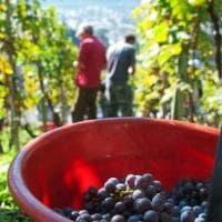Vivi....la vite: a Milano il festival del vino cooperativo