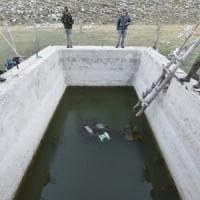 Mamma orsa e i suoi due cuccioli annegati in una vasca d'acqua privata