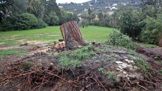 """Wwf: """"Criticità di gestione e biodiversità a rischio nei parchi italiani"""""""