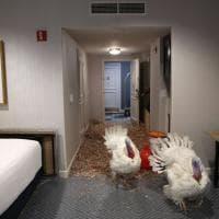 """Hotel di lusso per i tacchini """"graziati"""" da Trump"""