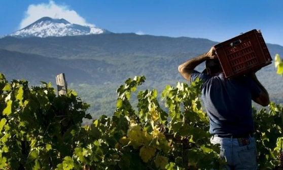 Nelle vigne delle Langhe, tra una visita in cantina e una cena in trattoria