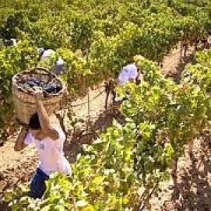 Oxfam accusa la Gdo, prezzi bassi sulla pelle dei lavoratori agricoli