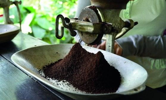 Coffee Sapiens, Ferran Adrià ci guida alla scoperta del caffè oltre i confini del noto