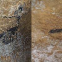 Lo Zodiaco nell'arte rupestre: il calendario in dipinti e bassorilievi