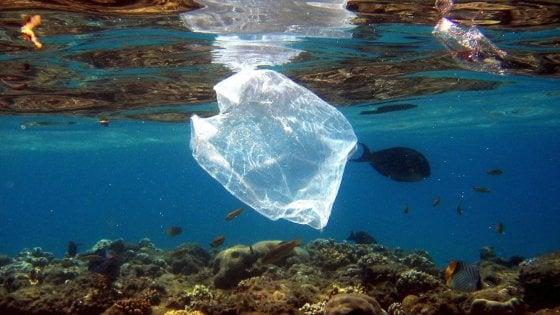 L'Australia riduce la plastica dell'80%: sacchetti monouso banditi dai supermercati