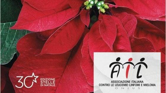 Prezzo Stella Di Natale Ail.Nelle Citta Italiane Tornano Le Stelle Di Natale Dell Ail