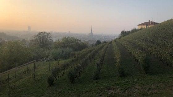 Castelli, tartufi e grandi vini: scoperte ed emozioni di un Piemonte da vivere