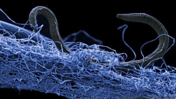 """C'è un mondo sconosciuto sottoterra. """"Ecosistema impressionante di microrganismi"""""""