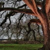 Aumentano alberi e foreste in Italia, ma meno aree agricole